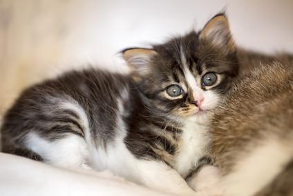 Le visite ostetriche per il gatto, quello che devi sapere